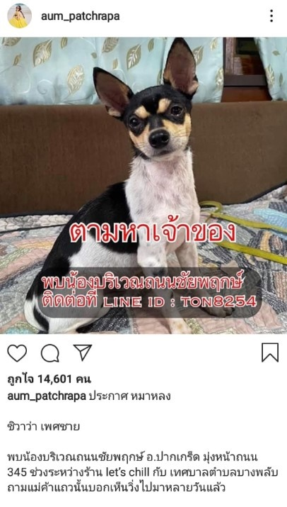 อั้ม พัชราภา โพสต์ประกาศตามหาเจ้าของสุนัข
