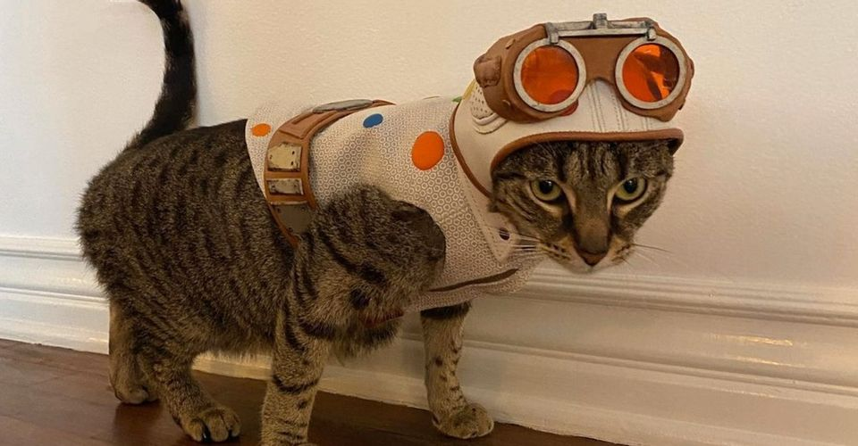 เดวิด แดสท์มัลแชน ตั้งชื่อแมวตัวนี้ว่า Bubblegum ที่แปลว่า หมากฝรั่ง